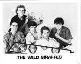 Wild Giraffes 02
