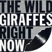 Wild Giraffes Right Here Front